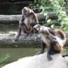 Фотопрогулка по Зоопарку в Карлсруэ