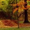 Фотопрогулка «Золотой октябрь»
