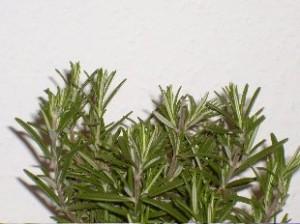 пряности и пряные травы
